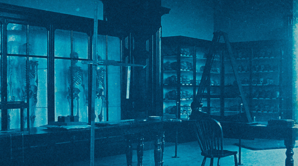 The Anthropometry Laboratory in TCD in 1891. The photograph shows display cases full of anthropological / anatomical 'specimens' with anthropometic instruments in the foreground.'The blue tone of the photographs derives from the cyanotype or blueprint process.