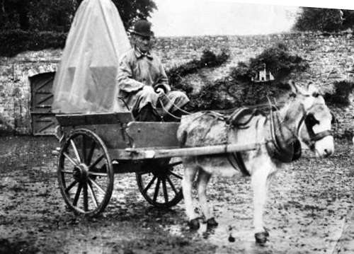 Mc Auliffe donkey and cart